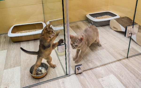 гостиница-для-кошек