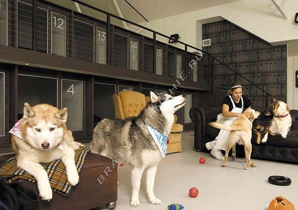 гостиница-для-собак