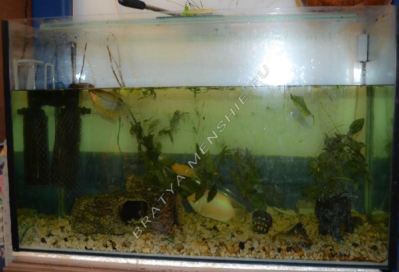 мутная вода в аквариуме почему и как устранить главная